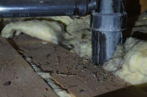 Termite carcasses