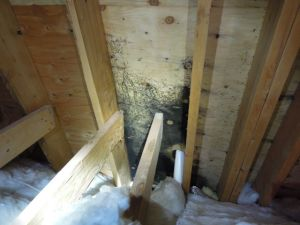 39) Mold-like stain at main bathroom exhaust vent duct