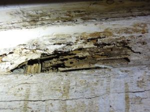 Termite damage at basement